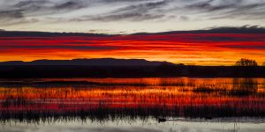 C-0521 Sunrise, Bosque Del Apache N.W.R., New Mexico