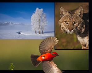 nature photography stock photos wildlife birds landscapes